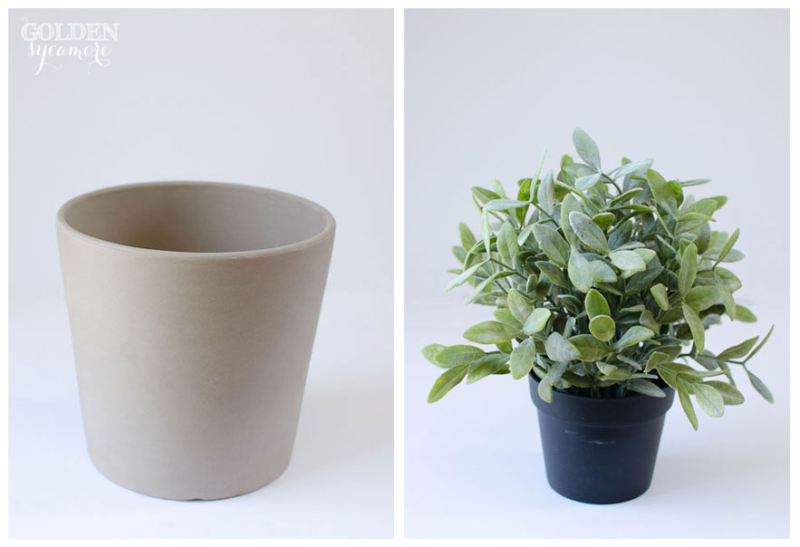 The Golden Sycamore: Easy Potted Plant Decor