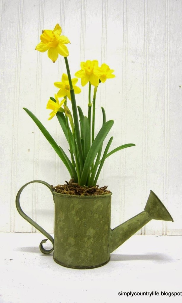 daffodil watering can