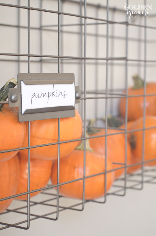 Mini pumpkins in metal wall crate