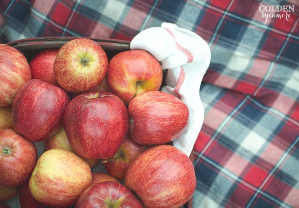 Fall apples and plaid | via www.thegoldensycamore.com