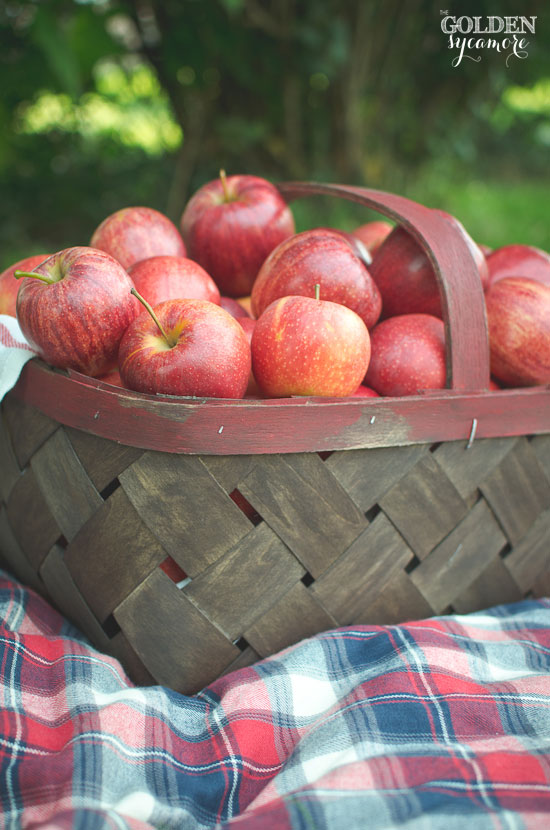 Easy way to make a vintage-looking orchard bushel basket from craft store basket | via www.thegoldensycamore.com