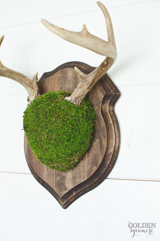 DIY moss deer antler mount via thegoldensycamore.com