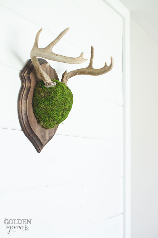 Moss covered deer antler mount on white planked wall via thegoldensycamore.com