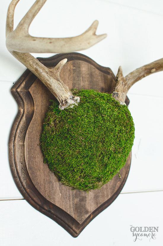 Moss deer antler mount via thegoldensycamore.com