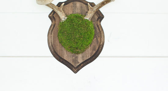 Moss Covered Deer Antler Mount