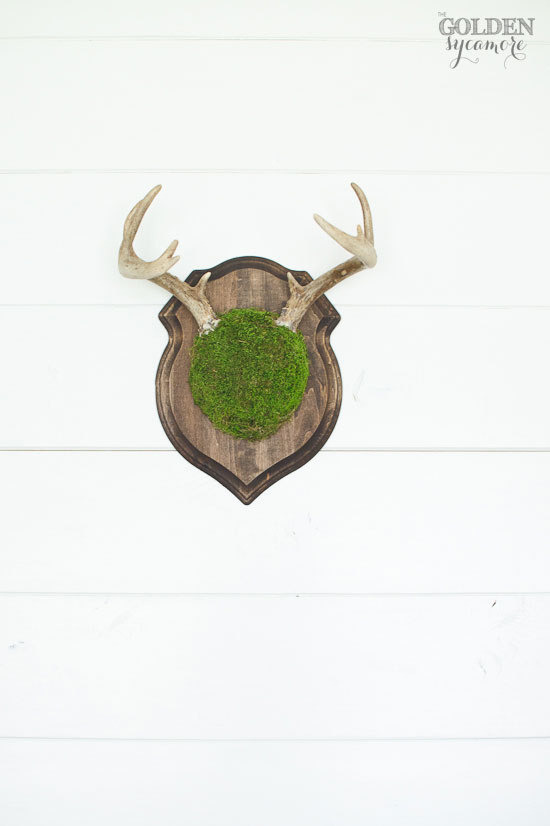 Mossy antlers on shiplap wall via thegoldensycamore.com