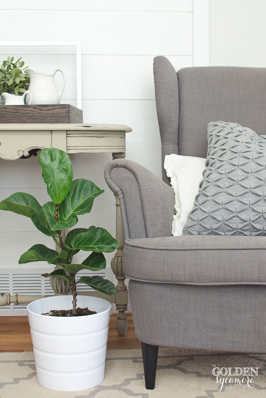 Fiddle fig plant & farmhouse style