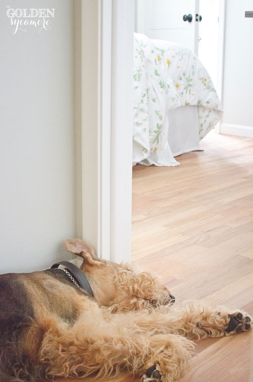 Bailey sleeping in hallway