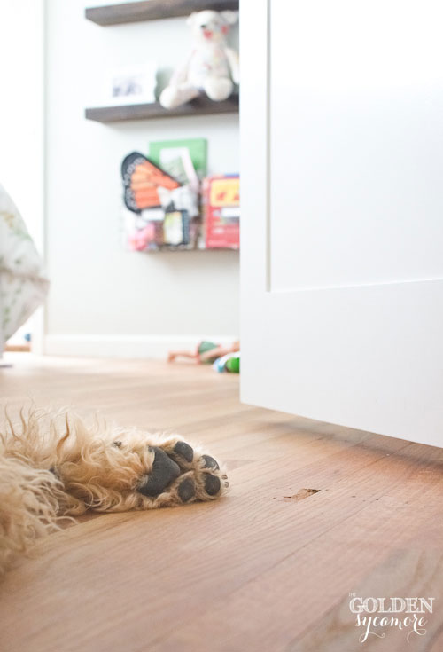 Bailey dog paw in hallway