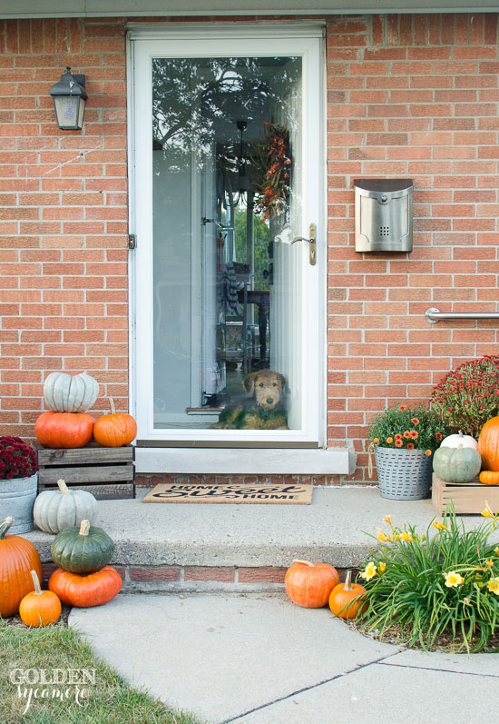 Cozy outdoor fall decor with cute puppy