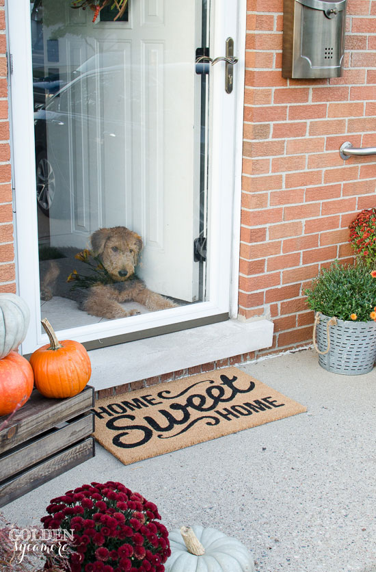 Fall front porch decor with Airedale Terrier puppy