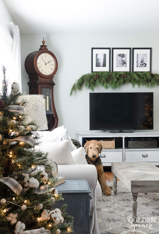 Airedale puppy and classic Christmas living room decor